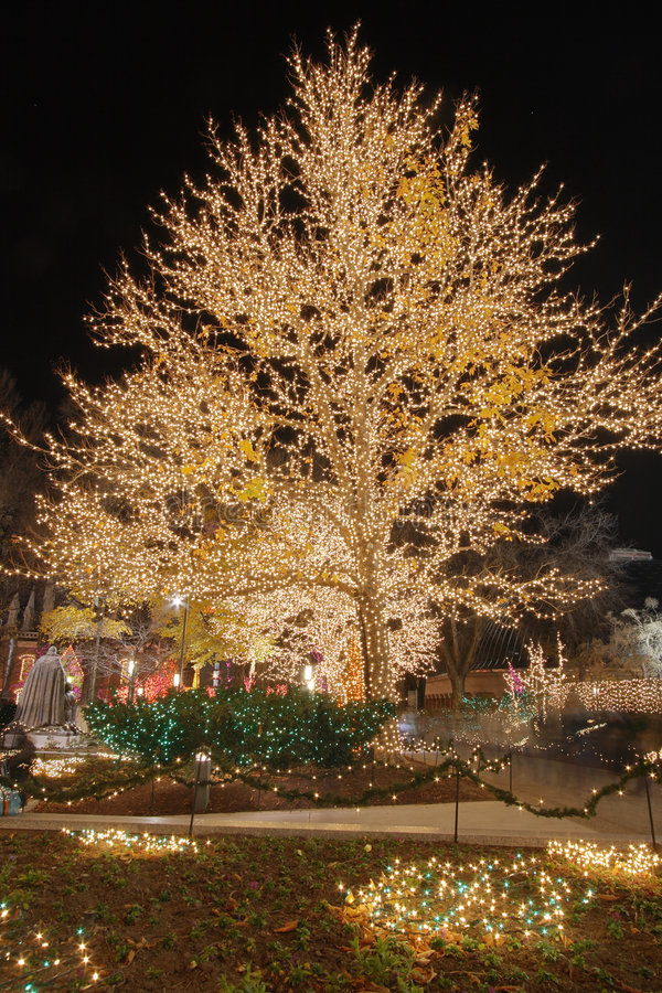 Christmas lights on a cottonwood tree #2. A cottonwood tree all lit up near temple square in salt lake city #2 stock photo