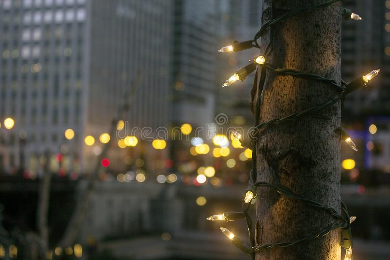 Christmas lights decorate a tree royalty free stock images