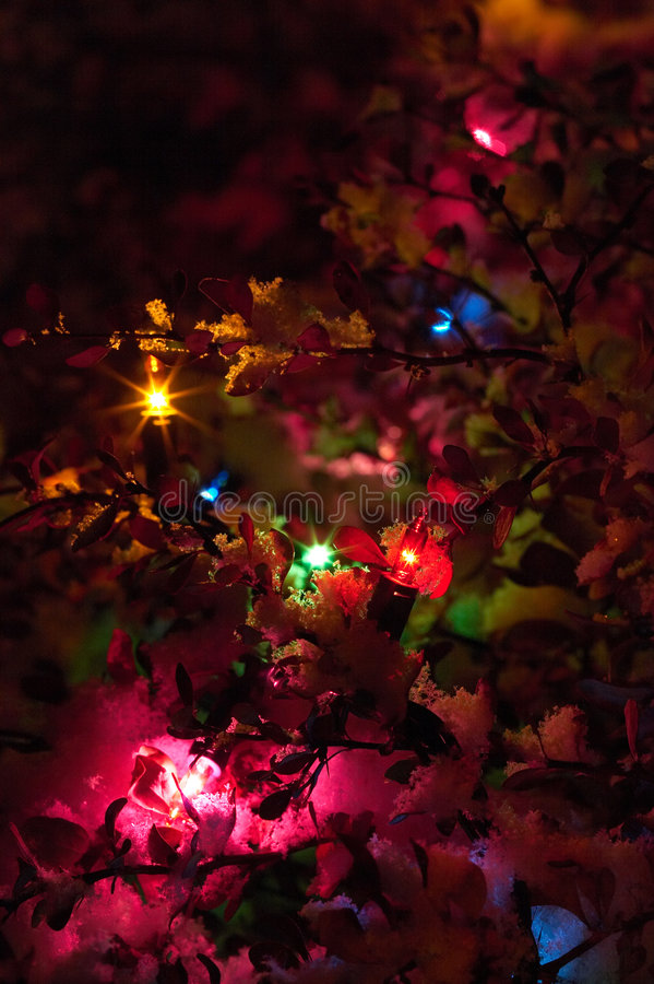 Christmas lights in snow. At night stock photography