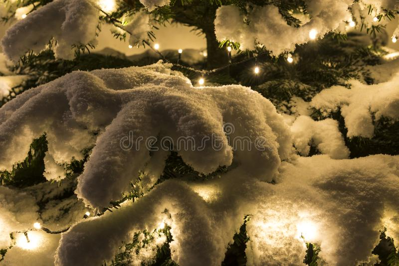 Christmas Lights with Snow on tree. Christmas Lights with Snow in the dark at Xmas royalty free stock photos