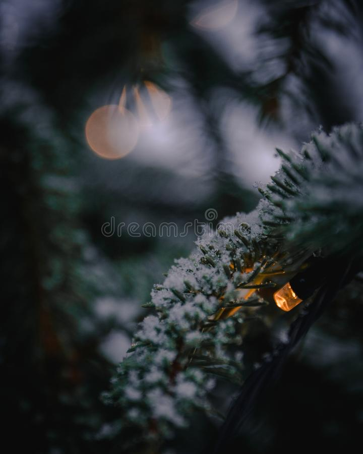 Christmas lights with snow on a Christmas tree. Christmas lights with snow on the Christmas tree of the local church. The photo was taken on a snowy winter day stock photography