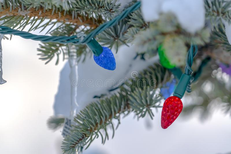 Christmas lights and snow on a Christmas tree. Multi-colored Christmas lights on a Christmas tree with a blanket of snow in the background stock images