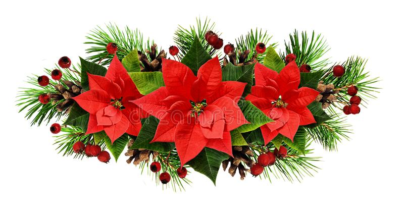 Christmas line arrangement with pine twigs, cones, and poinsettia flowers. Isolated on white. Flat lay. Top view royalty free stock photography