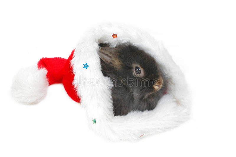 Christmas lion rabbit stock photo