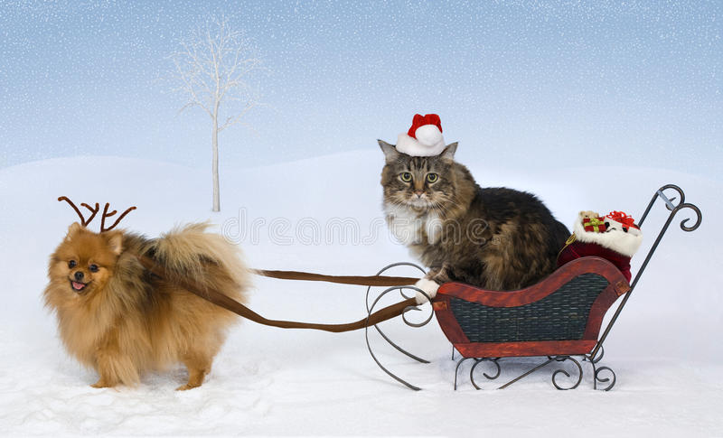 Christmas for Max & Jolie royalty free stock image
