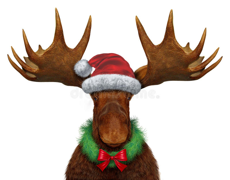 Christmas Moose. With santa claus hat and a holiday wreath with a red silk bow as a seasonal symbol of celebrating the season of giving with a festive funny royalty free illustration