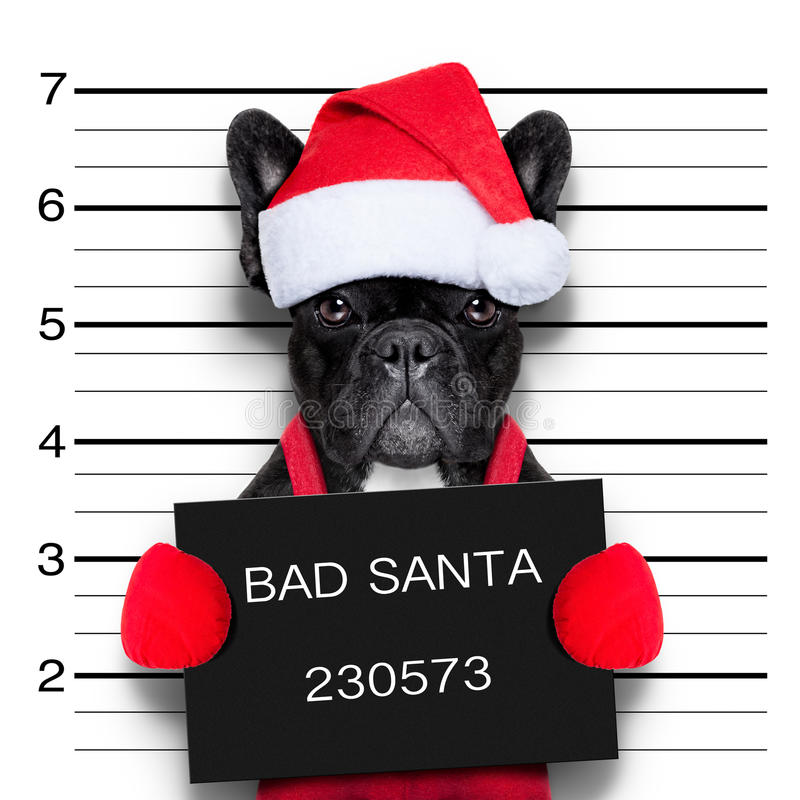 Christmas mugshot. Mugshot of a christmas santa bad dog