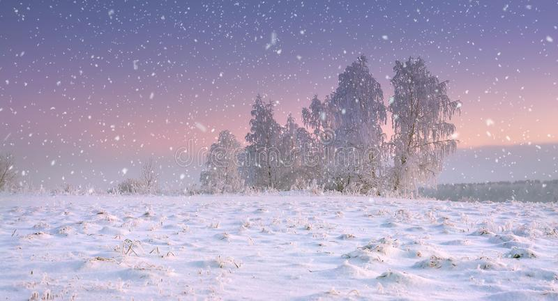 Christmas nature. Calm winter landscape in snowfall. Snowflakes fall on snowy meadow with frosty tree at dawn. Wonderful winter scenery. Xmas time on stock image