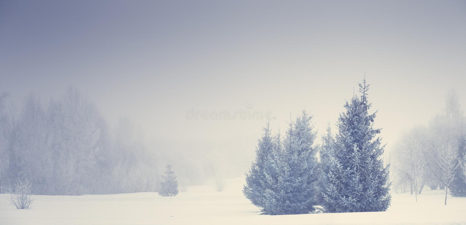 Christmas nature. Foggy winter landscape. stock photos
