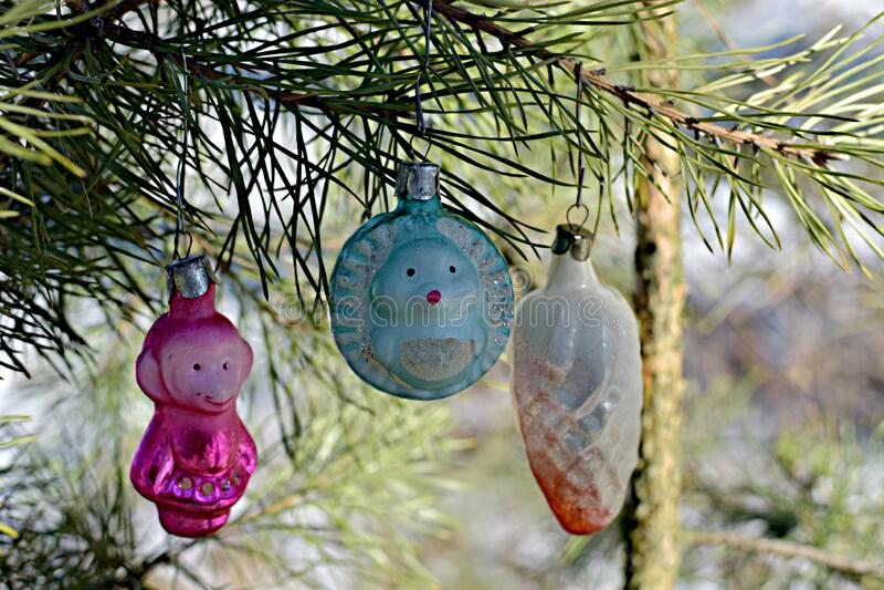 Hedgehog Christmas Ornament 2021 Pine Cone Hedgehog Photos Free Royalty Free Stock Photos From Dreamstime