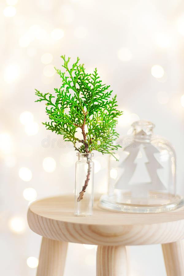 Christmas New Year home interior decoration background. Green juniper twig in glass wooden fir tree ornament in cloche dome jar stock photo