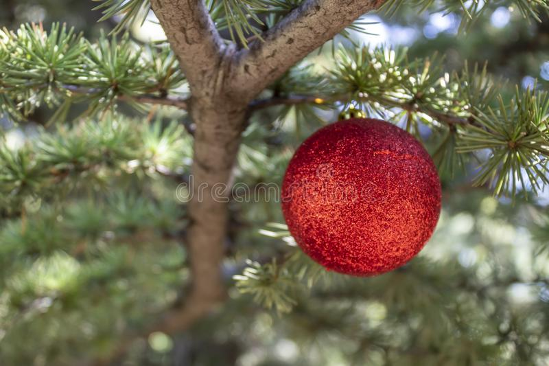 Christmas / New Year Red Decorative Ball Hanged on The Pine Tree. New Year`s red decorative element hanged on real pine cone tree. Copy space on the left side royalty free stock photos