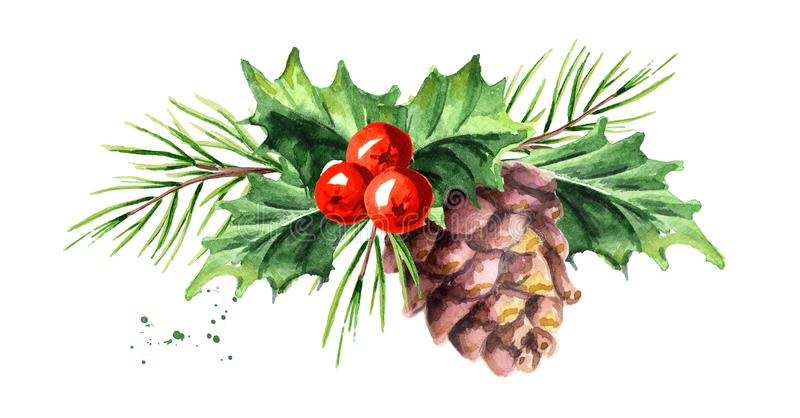 Christmas and New Year symbol decorative Holly berry with pine cone and branch composition. Watercolor hand drawn illustration, is stock illustration