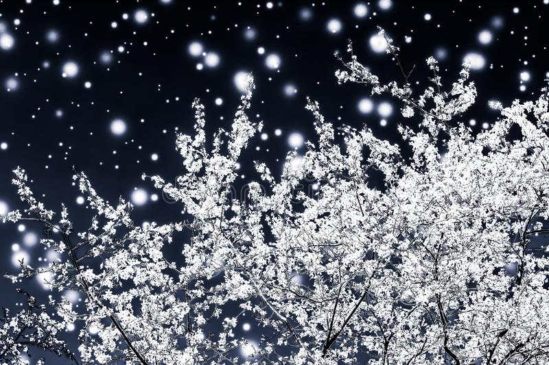 Christmas, New Years black floral background, holiday card design, flower tree and snow glitter as winter season sale promotion. Branding, magic and festive royalty free stock photos