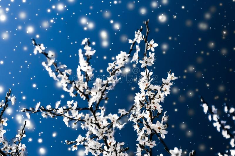Christmas, New Years blue floral background, holiday card design, flower tree and snow glitter as winter season sale promotion. Branding, magic and festive stock photography