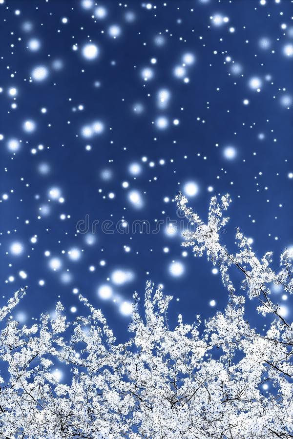 Christmas, New Years blue floral background, holiday card design, flower tree and snow glitter as winter season sale promotion. Branding, magic and festive royalty free stock image