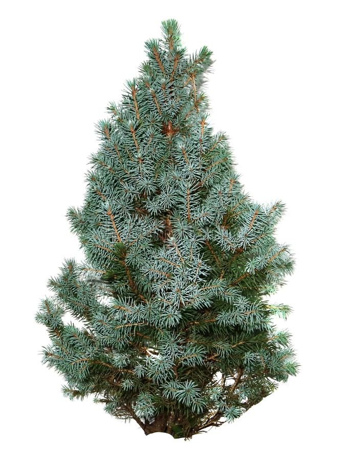 Free Christmas Object Isolated On White Background. Stock Photo - 124122860
