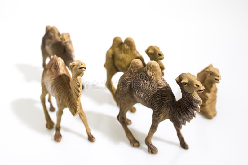 Christmas objects, plastic animals camels for nativity diorama i stock image