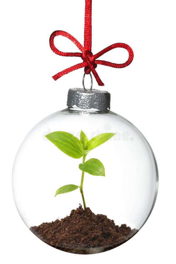 Download Christmas ornament stock image. Image of care, decorative - 11960319