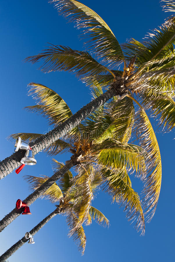 Christmas Palm. S with bells and ribbons in a sunny day - Miami USA 2010 stock photo