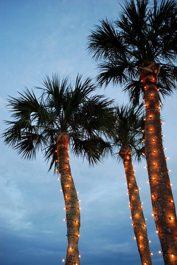 Download Christmas palm tree stock photo. Image of night, winter - 12490068