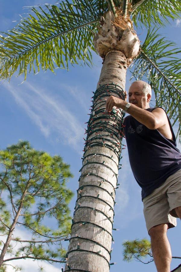 Christmas Palm Tree stock images