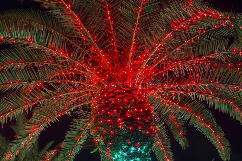 Christmas Palm Tree stock image