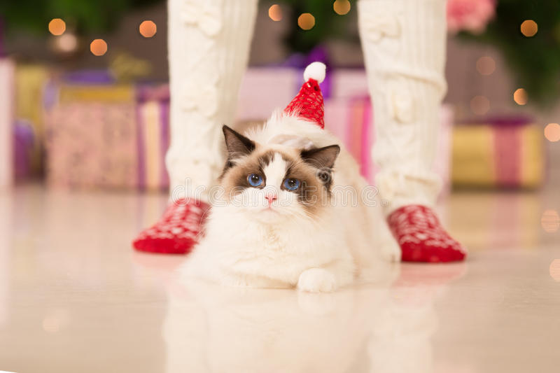 Christmas party, winter holidays woman with cat. New year girl. Christmas tree in interior background stock photos