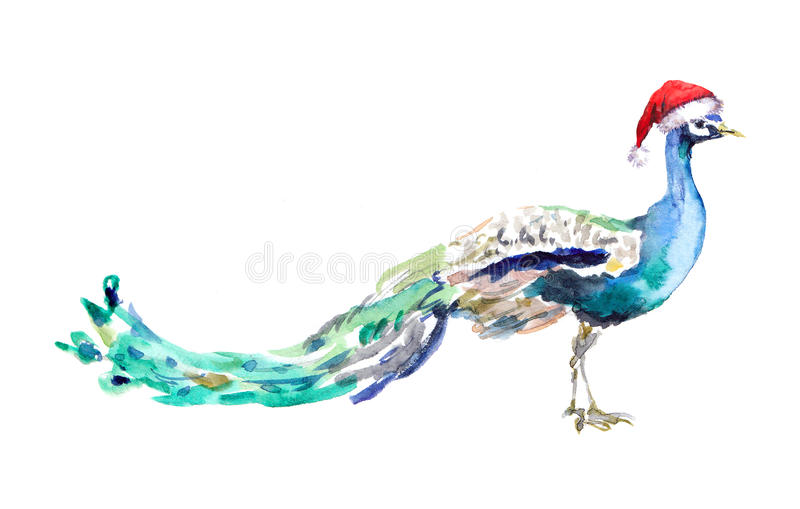 Download Christmas Peacock In Red Santas Hat Watercolor Animal Stock Illustration