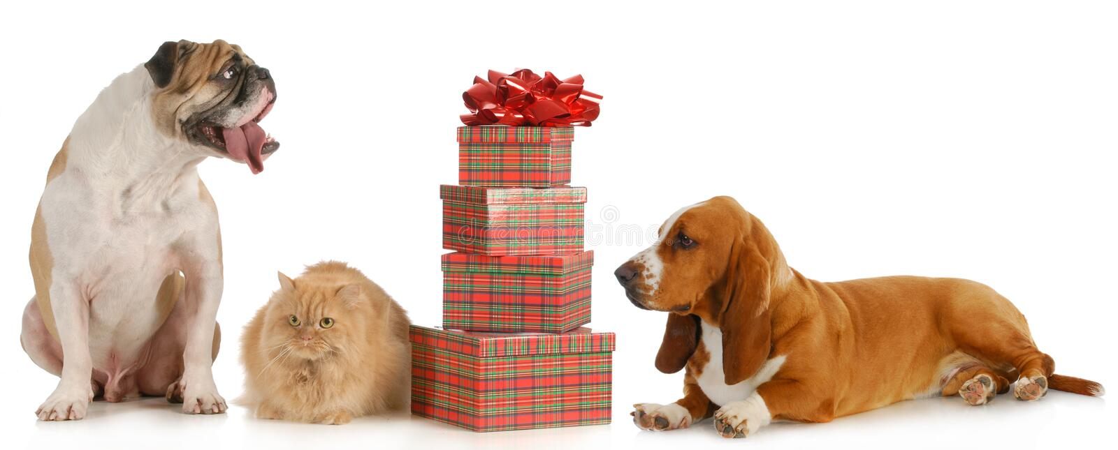 Christmas pets royalty free stock images