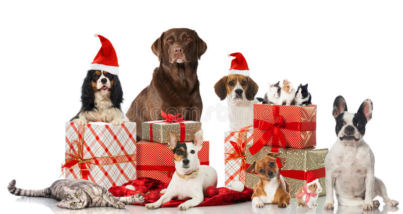 Christmas pets. Different dogs, rabbits and a cat with christmas decoration isolated on white