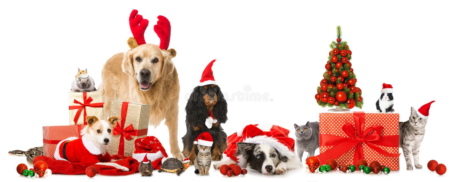 Christmas pets. Isolated on white