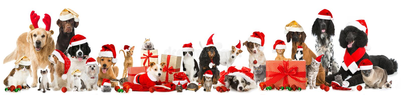 Christmas pets. Many christmas pets isolated on white royalty free stock image