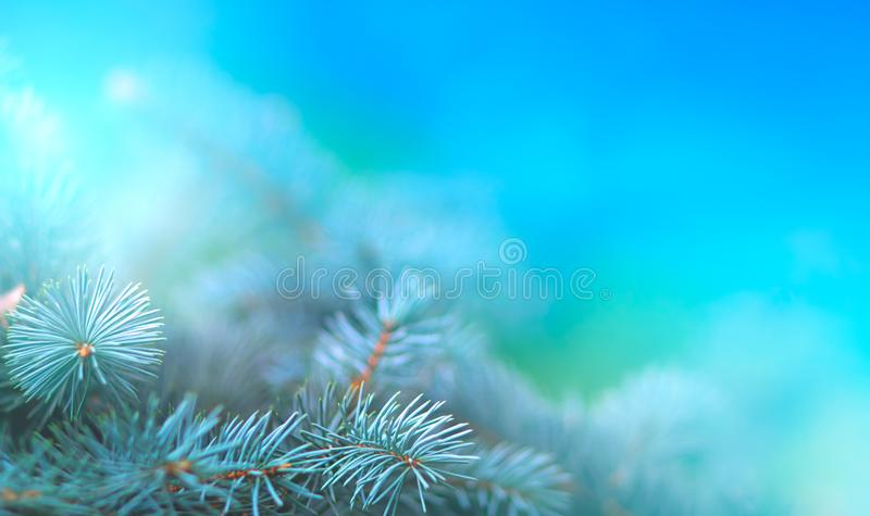 Christmas pine branch in the rays of light close up, blue background with reflections of stars and beautiful bokeh of lanterns. royalty free stock photos