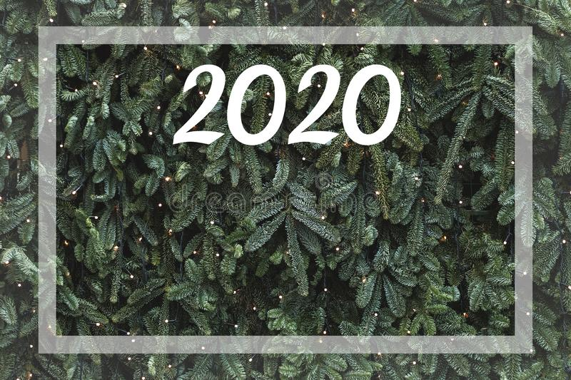 Empty place for plan 2020 year pine tree texture. Christmas pine tree background. Empty place for plan of 2020 year and future goals. Space for sign and design royalty free stock images