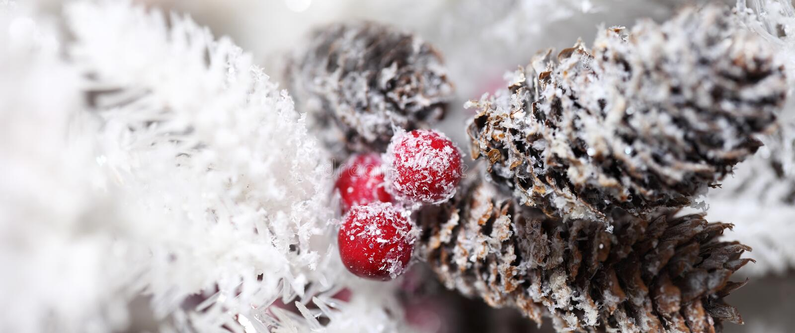 Christmas pinecones and holly berry. Close up royalty free stock images