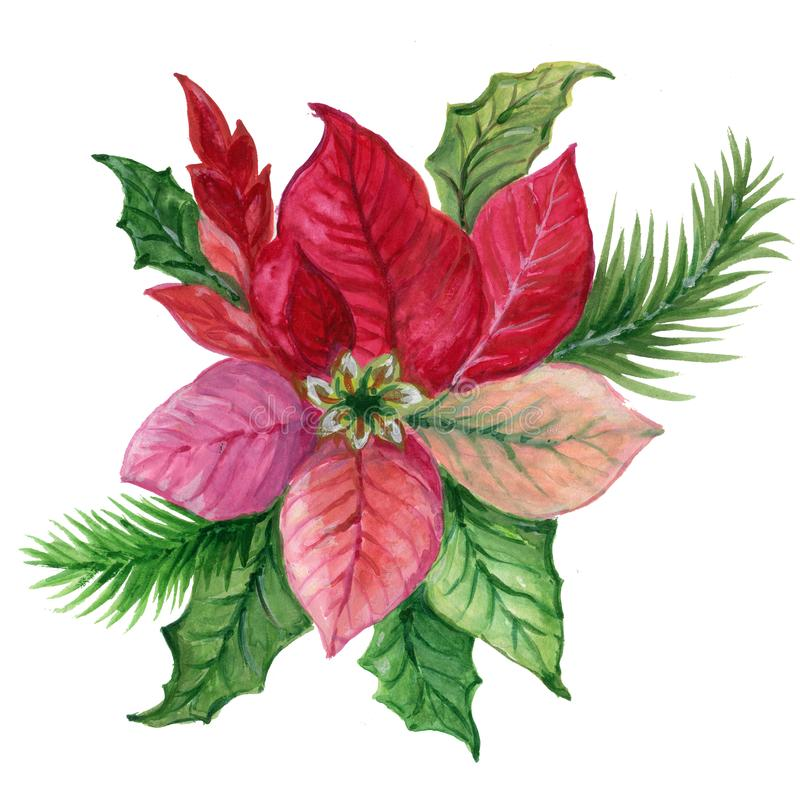 Christmas plant poinsettia watercolor gouache colorful pink green red for holiday party greetind card and poster stock illustration