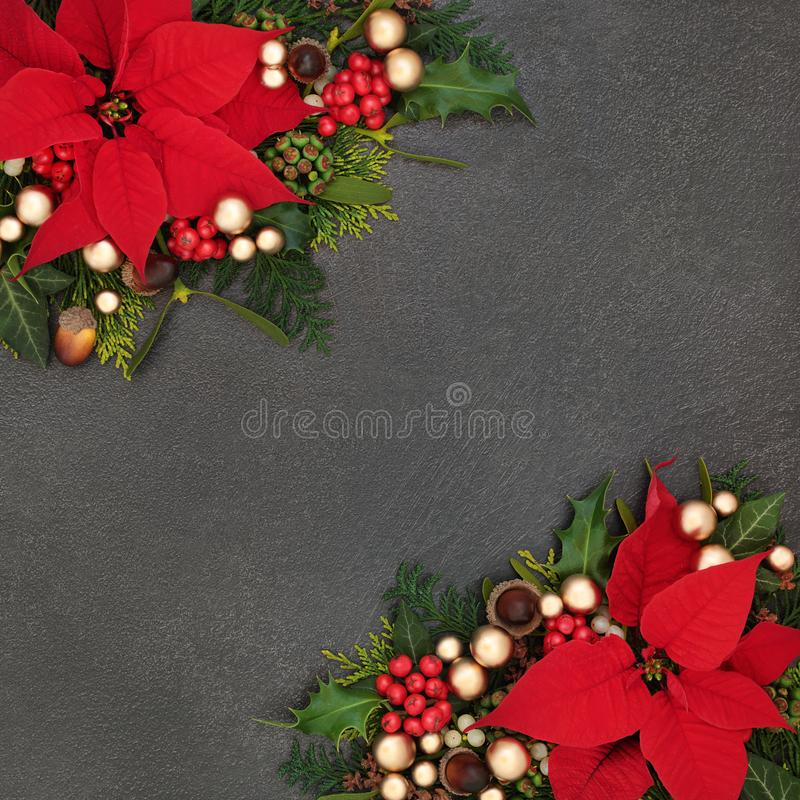 Christmas Poinsettia Flower Border. Poinsettia flower background border with winter flora and gold bauble decorations on grunge grey. Festive theme for royalty free stock photography