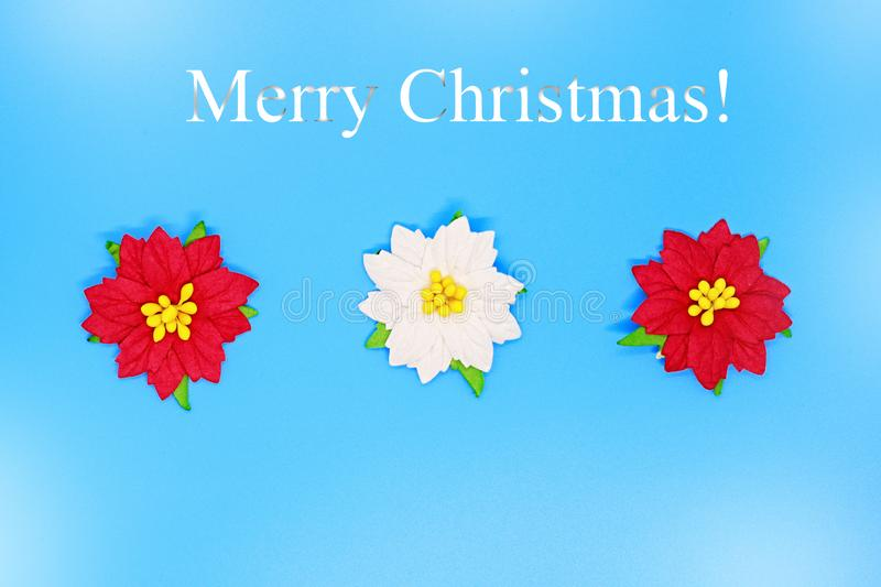 Christmas poinsettia flowers close-up on a blue background, Christmas backgrounds, Christmas composition, a place for tex royalty free stock photography