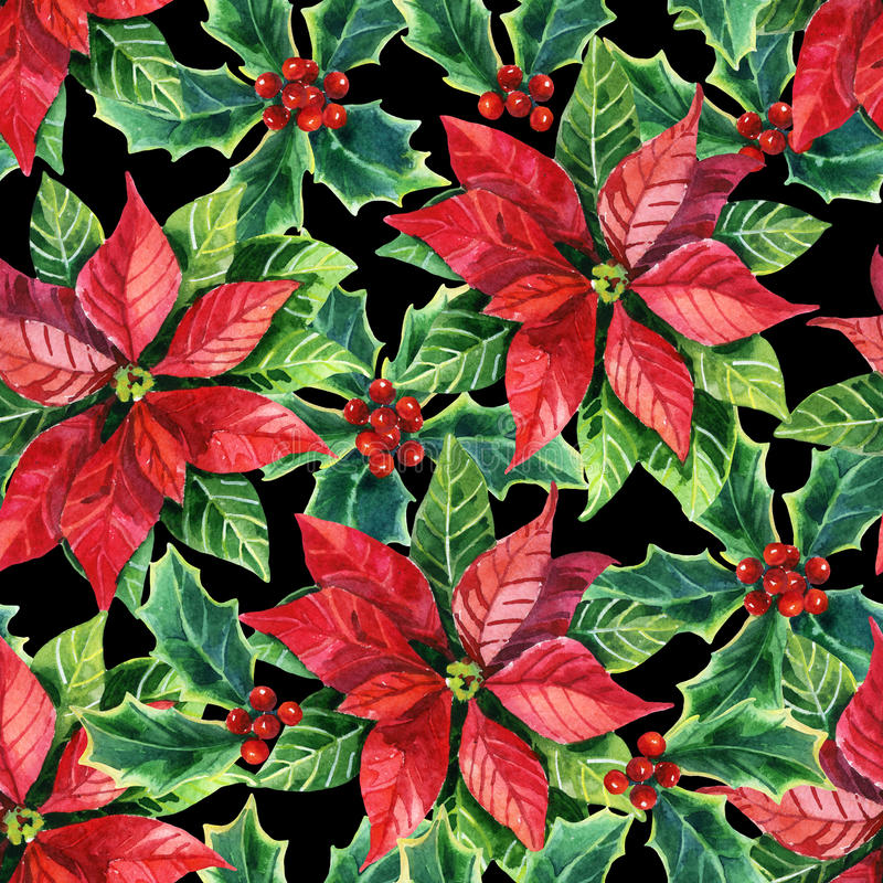 Christmas poinsettia, watercolor flower royalty free illustration