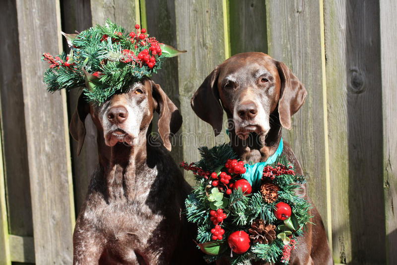 Christmas pointers stock photo