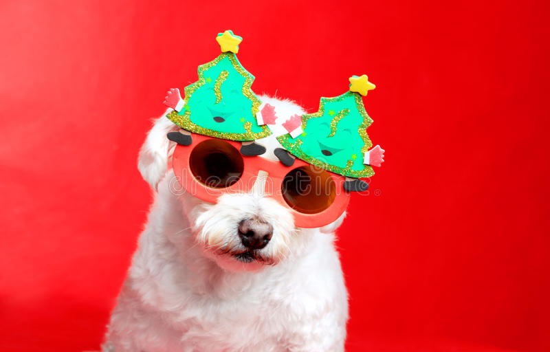 Download Christmas Pooch Royalty Free Stock Images - Image: 21695939