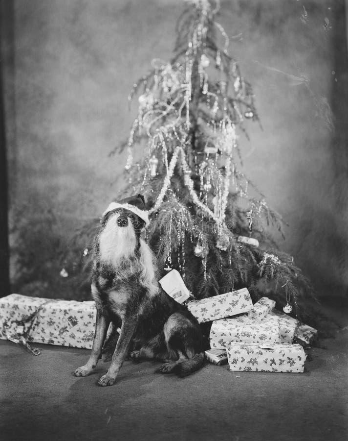 CHRISTMAS POOCH stock photos