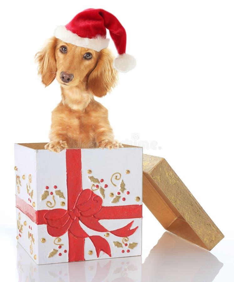 Christmas puppy stock image