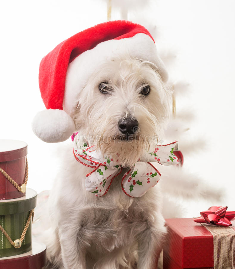 Download Christmas Puppy stock photo. Image of gifts, xmas, presents - 26654074