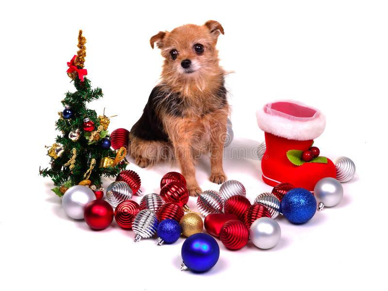 Christmas puppy with colorful decorations. Isolated on white background stock image