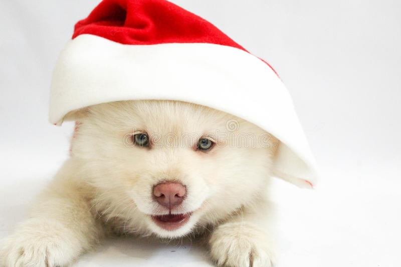 christmas puppy dog stock photos