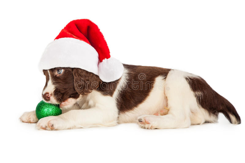 Christmas Puppy Santa Hat and Bulb royalty free stock image
