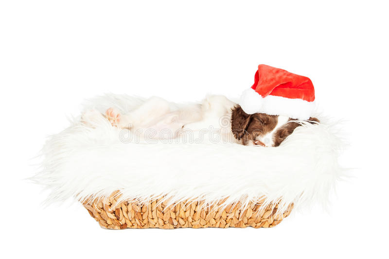 Christmas Puppy Sleeping in Basket royalty free stock photos