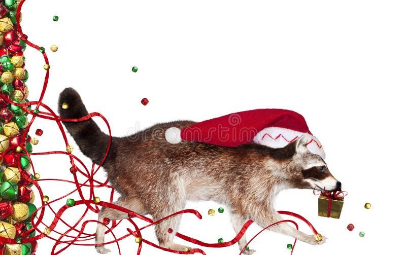 Download Christmas raccoon stock image. Image of animal, abstract - 22100111